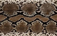 Gyvatės odos raštas