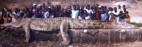 Ponas Gustave, Nilo krokodilas, kuris 6 metrų ilgio ir ėda žmones