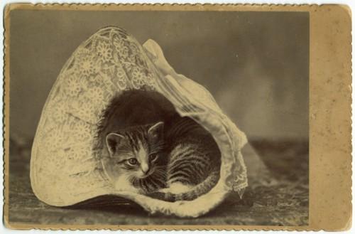 Kačiukas skrybėlaitėje, 1885 nuotrauka