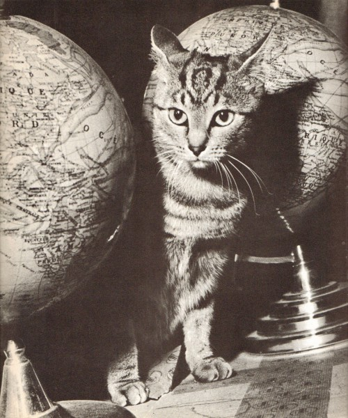 Katė bando užgrobti pasaulio valdžią, bet aš to nedaleisiu