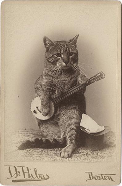 Šita katė groja country stiliumi ir negana to dar miaukia, šlykštu klausyt