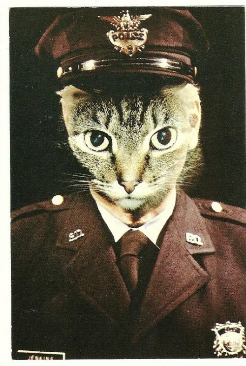 Katinas policininkas nuo kitų policininkų skiriasi tuo, kad ima kyšius.