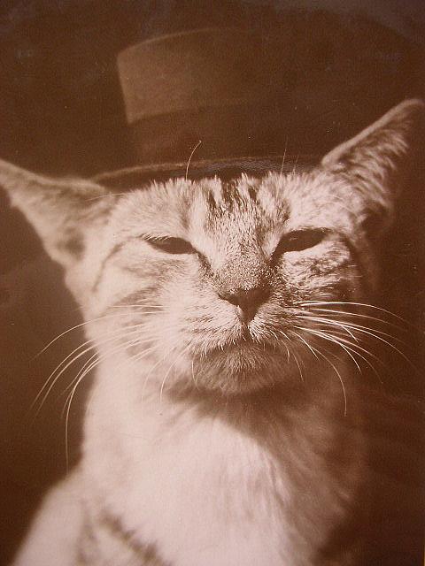 Apsimestinis katinų iškilnumas yra visiškai apsimestinis.