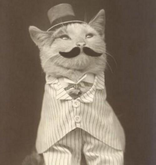 Katinas apsimetinėja Mustažmanu.