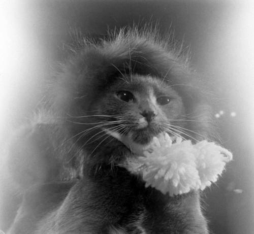 Katė su kailine kepure. Kur žiūri visokie gyvūnų globotojai?