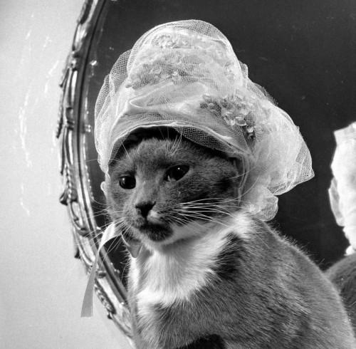 Katė - kaip beždžionė, bando pamėgdžioti moteris