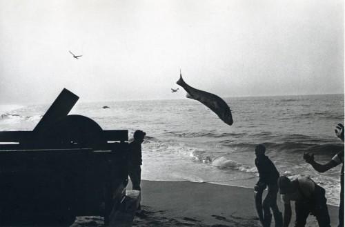 Skrendanti žuvis