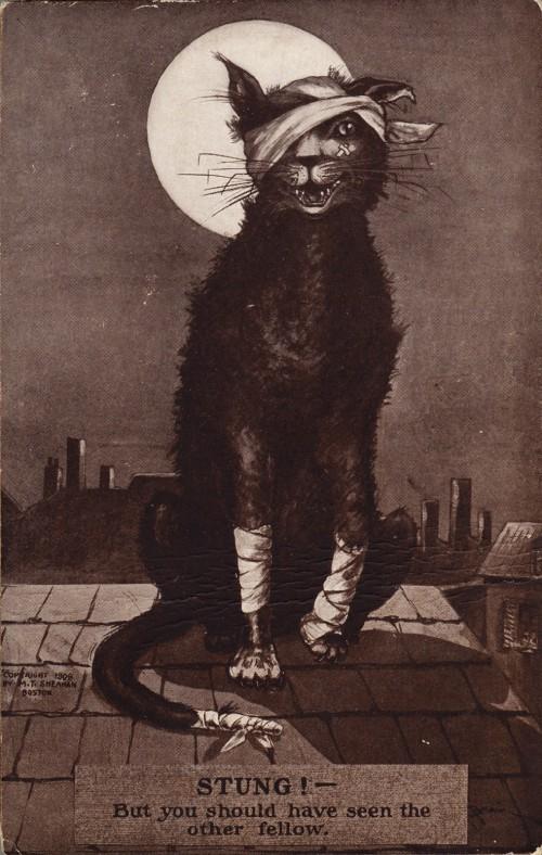Kažkokia sumušta katė grasina, kad dar jums atkeršys
