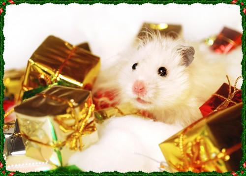 Kalėdinis žiurkėnas Rokiškis Rabinovičius