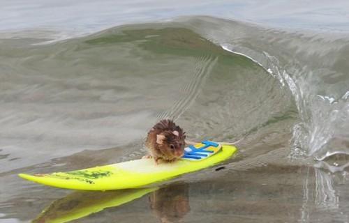 Žiurkėnas Rokiškis Rabinovičius atostogauja Havajuose