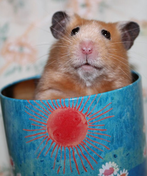 Šventinis žiurkėnas Rokiškis sveikina jus su Velykomis