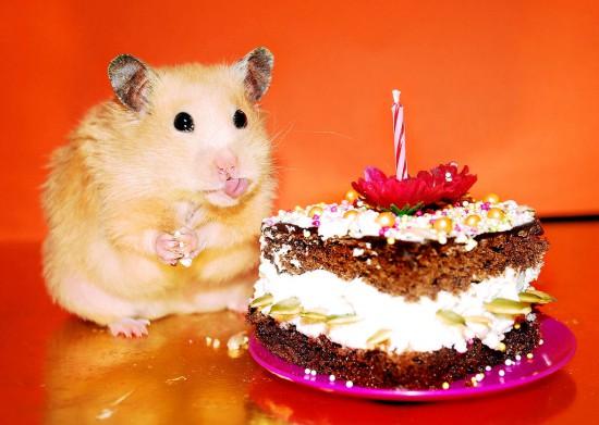 Taip, visi tortai yra manęs.
