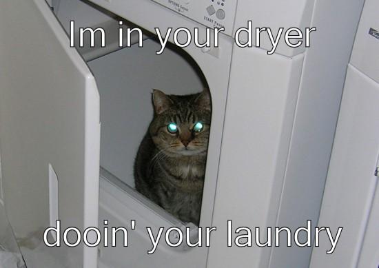 Tipiškas vagis yra kokia nors katė, kuri vagia dešras, skalbinius, pinigus ir dar ką nors. Visada katės apsimeta geromis, bet išties tai yra klastingi ir nelabai padorūs gyviai, kuriuos tenka gaudyti nusikaltimo vietose.