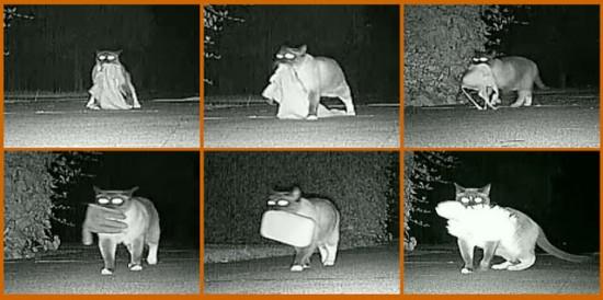 Šitą katę susekė tik atlikę tarnybinius patikrinimus su techninėmis slapto sekimo priemonėmis, nes jinai vogė skalbinius iš žmonių krūvomis. Iš idėjos tur būt, nes nevogti jinai negalėjo.