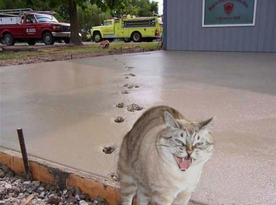 Kartais būna, kad katės bando dirbti statybose ar kokiu nors verslu užsiimti, paslaugas kam nors teikti. Štai jums ir prašom.