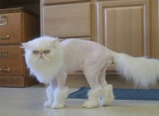 Visi puikiai žino, kad katės yra visiškai kvaili ir išprotėję padarai. Matyt, jos ir internetuose ieško atitinkamai, be jokio proto.