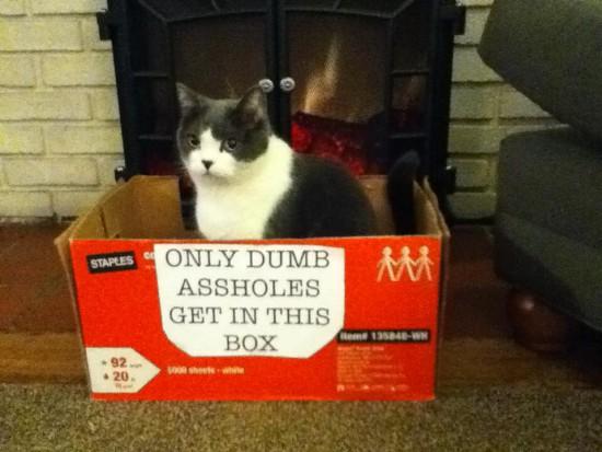 Balvonas sėdi raudonoje dėžėje