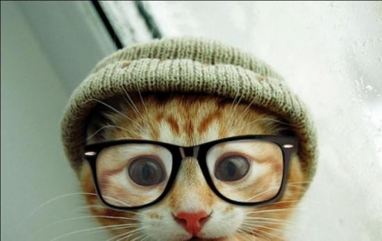 Ne visos katės pasižymi protu, tačiau visos katės nepasižymi protu. Todėl skaitykite blogus ir jais dalinkitės arba pavirsit kačių blusomis.
