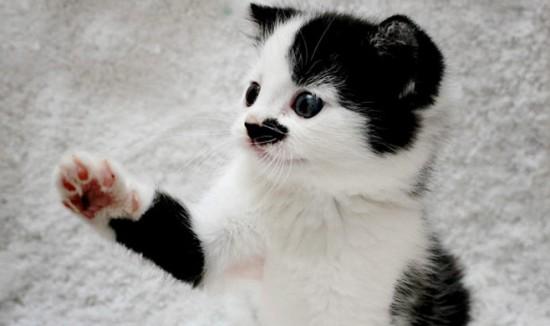Labai aišku tokie mieli kačiukai visi ir taip toliau, bet kačiukai yra katės, o katėms pasigailėjimo nebus.