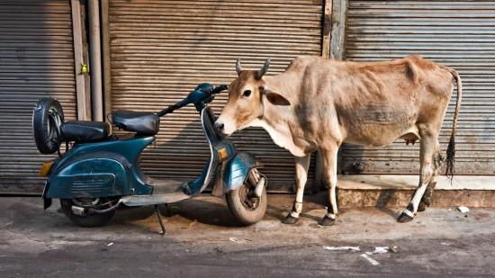 """Nesuvokti nuosavybės sąvokos, neskirti savo pinigų nuo kažkieno kito pinigų - tai panašiai, kaip neskirti karvės nuo mopedo (žinau, kad čia nuotraukoje motoroleris). Įsivaizduokite žmogų, kuris mopedą pavadina karve, o paskui iš tokios """"karvės"""" nuoširdžiai bando primelžti pieno, o paskui dar ima šnekėti apie karvės variklio apsukas."""